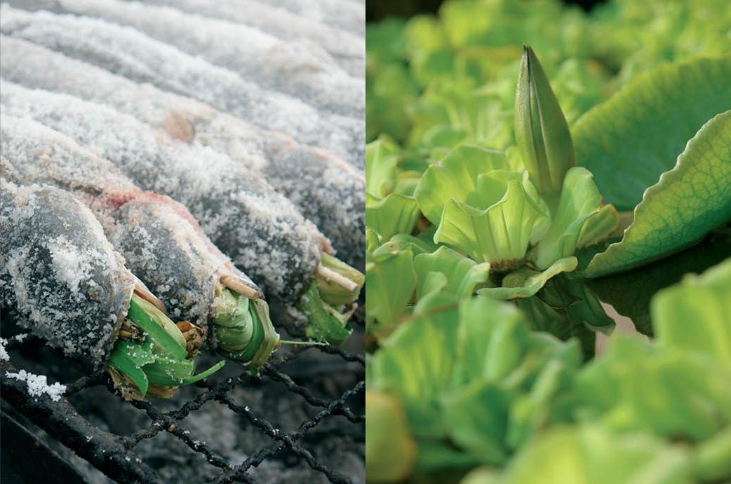 Salt-roasted+whole+fish+with+herbs.jpeg