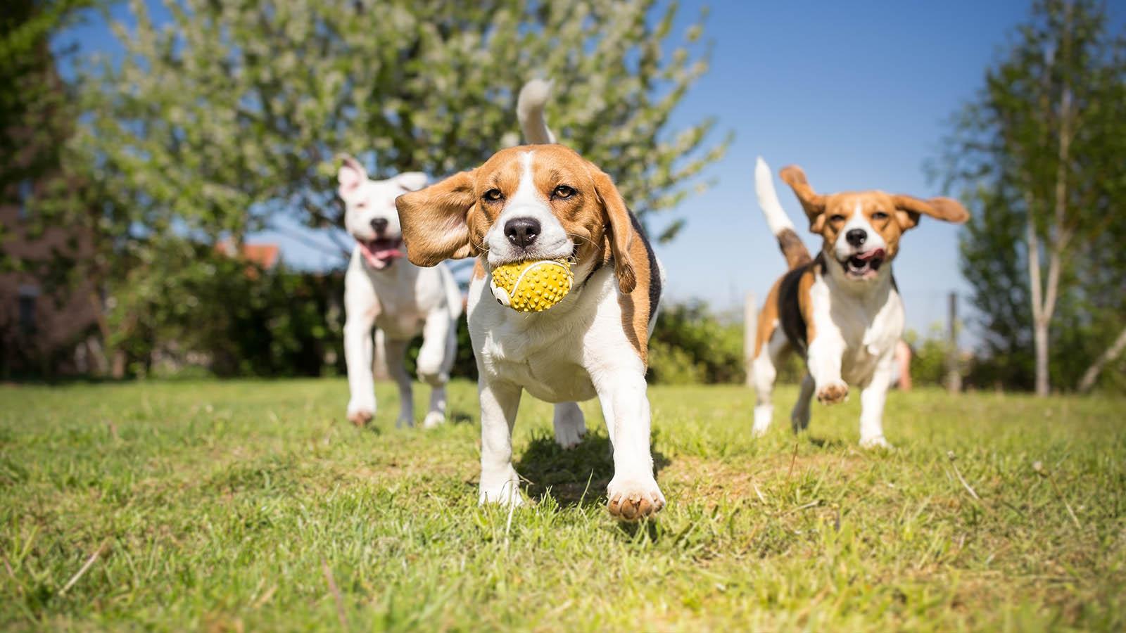 Pet Engine Marketing Join Community