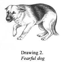 Fearful Dog Pet Engine Marketing