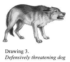 Defensively Threatening Dog Pet Engine Marketing