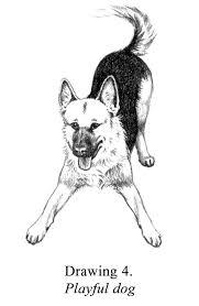 Playful Dog Pet Engine Marketing