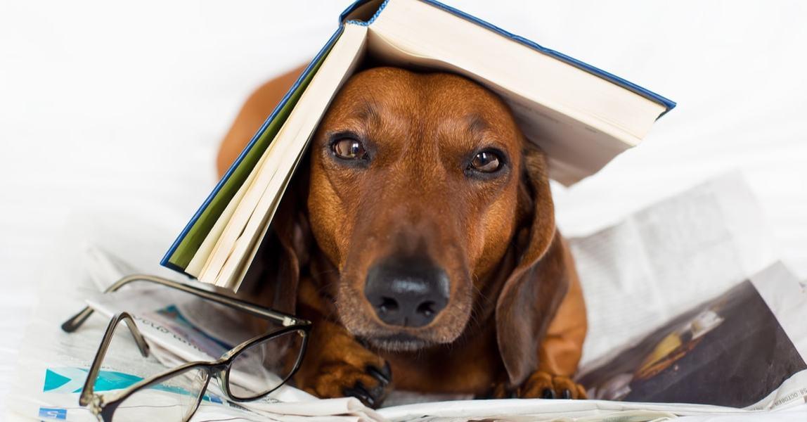Pet Store Marketing Quiz Pet Engine Marketing