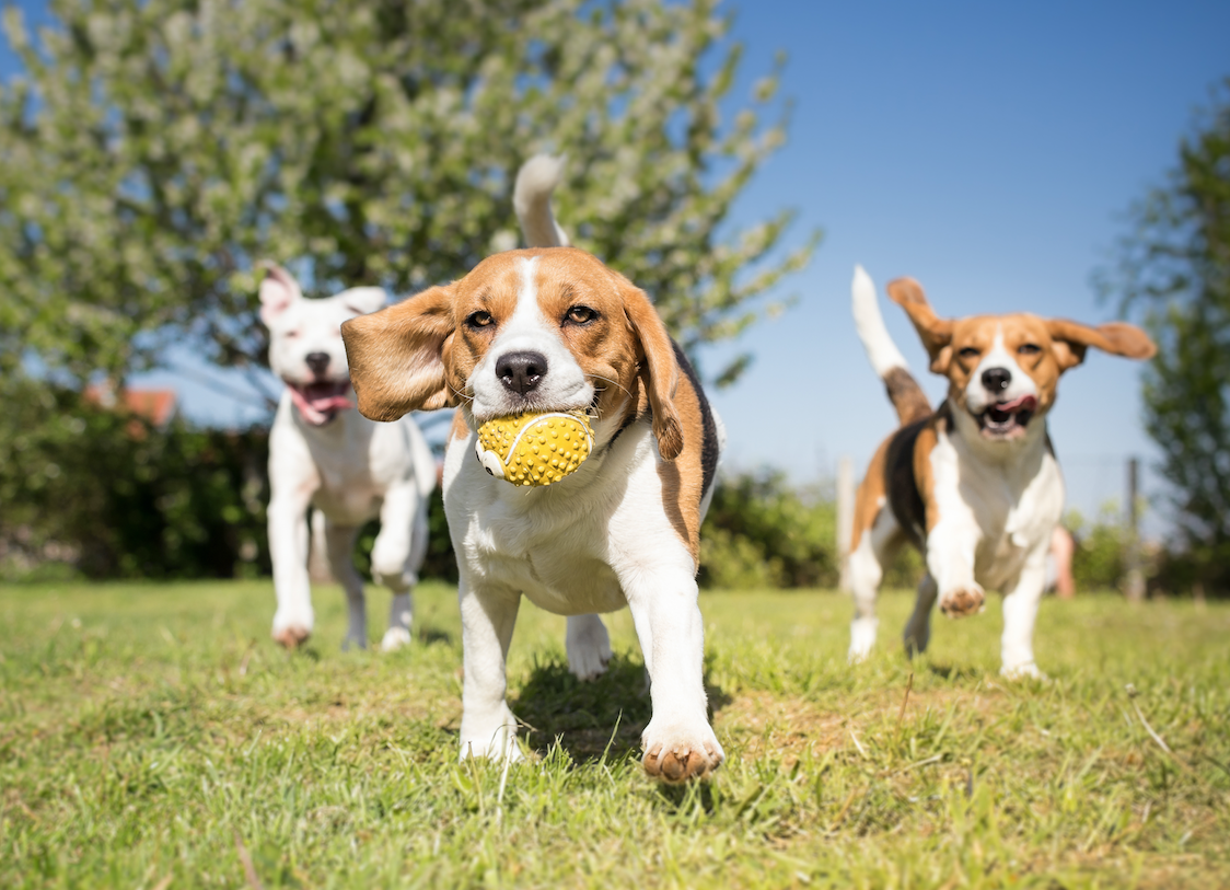 If you sold balls to dogs, wouldn't you advertise at a dog park? Go where you're wanted.