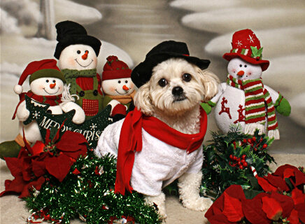 Holiday pet photoshoots are consistent winners