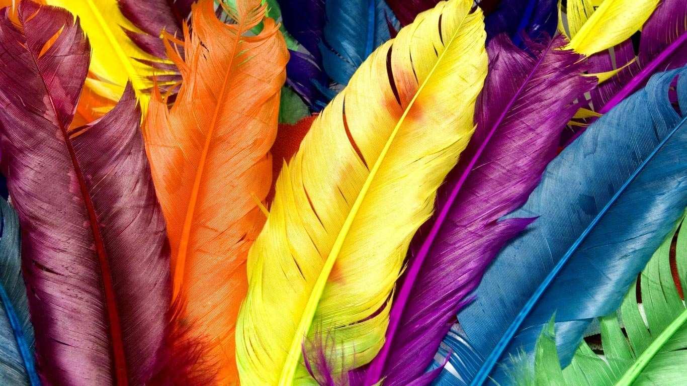 Magic-of-Color.jpg