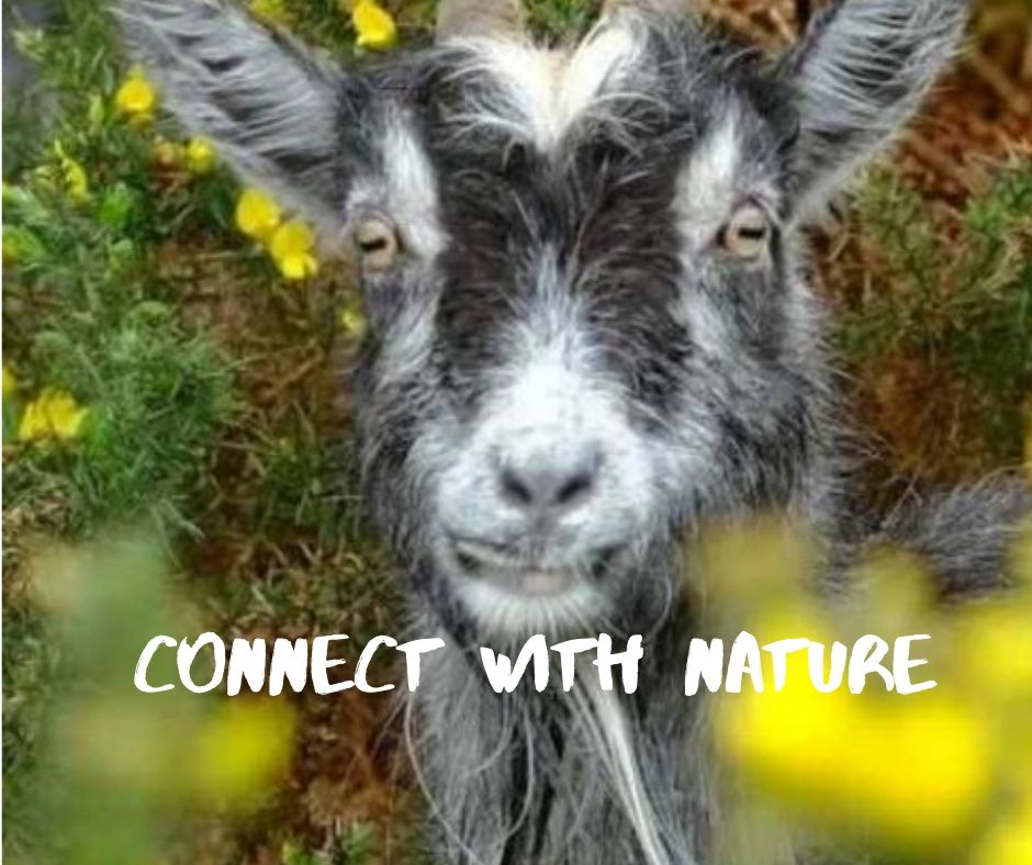 Connect with Nature.jpg