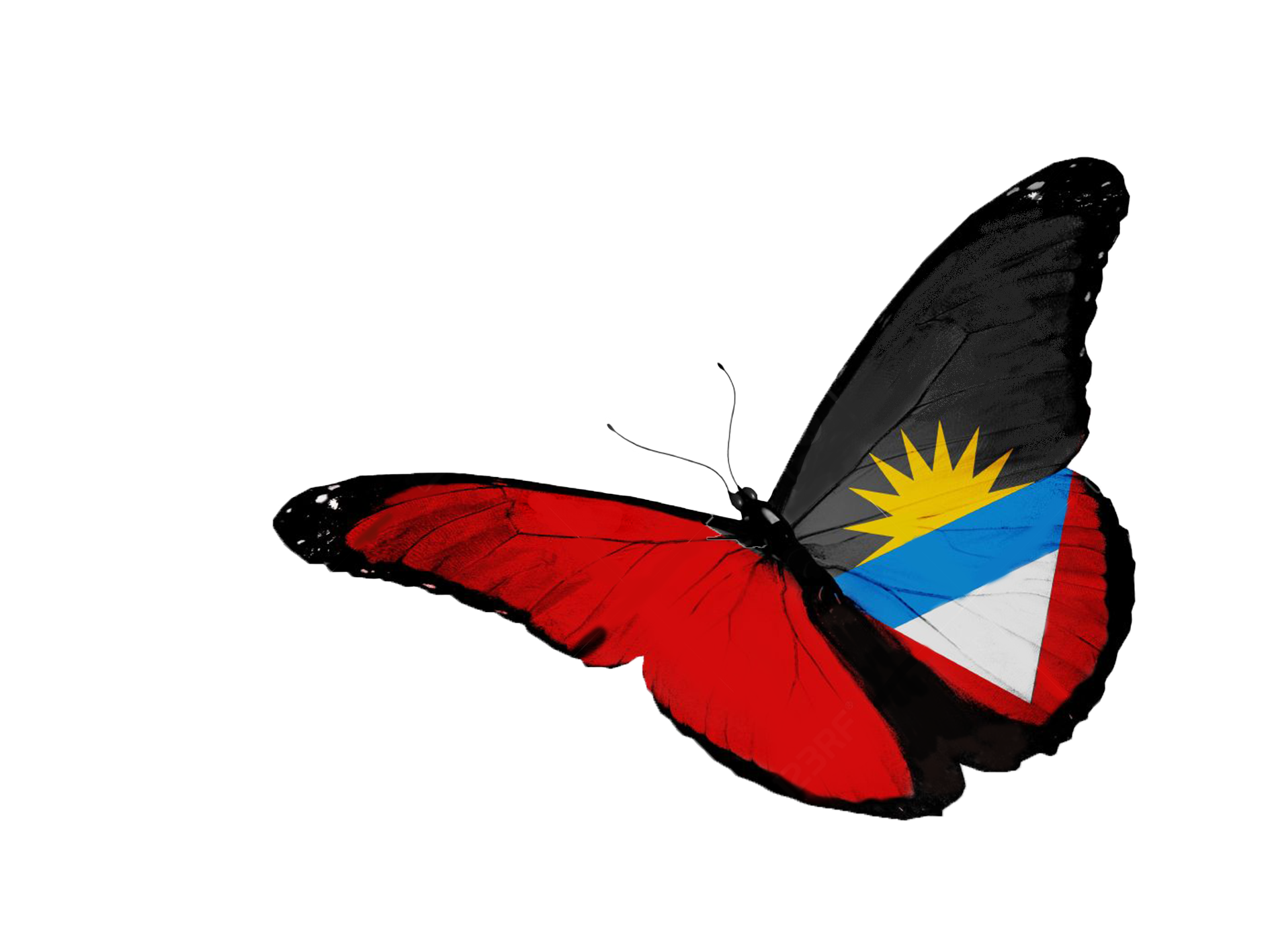 antigua-and-barbuda-flag-butterfly-flying-isolated-on-white-background.png