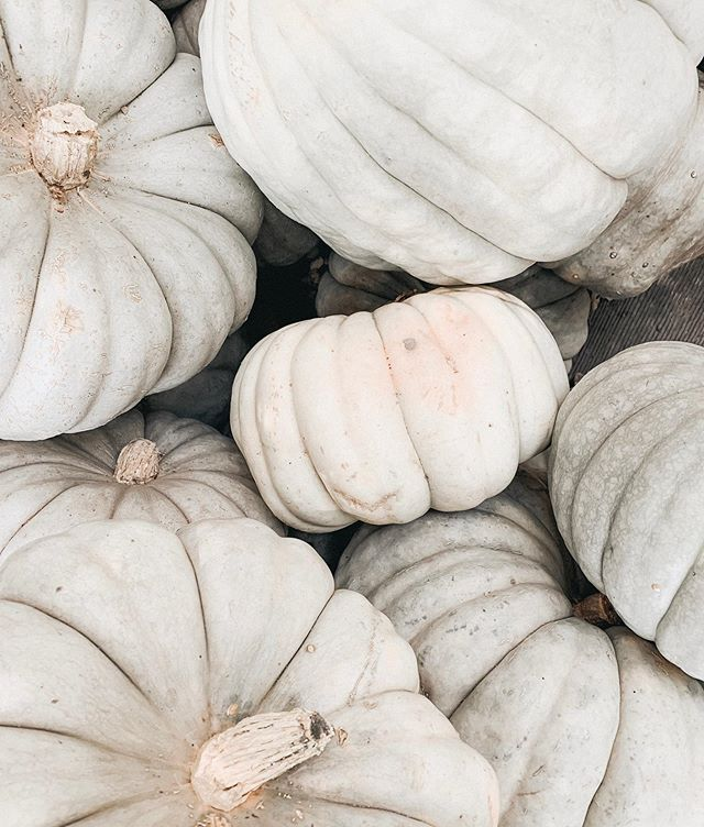 along with our many other dreams, cody & i decided that pumpkin farming will be added to the list 🍂  fall is here!!!!