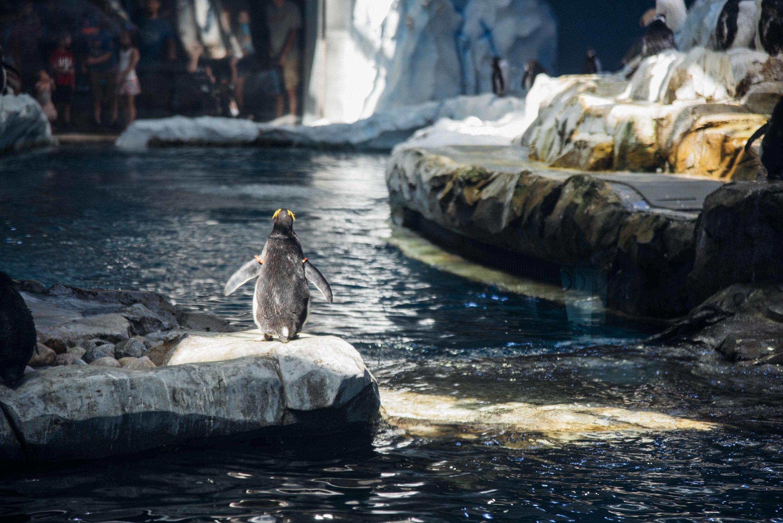 Zoo Aug, 2018 002.jpg