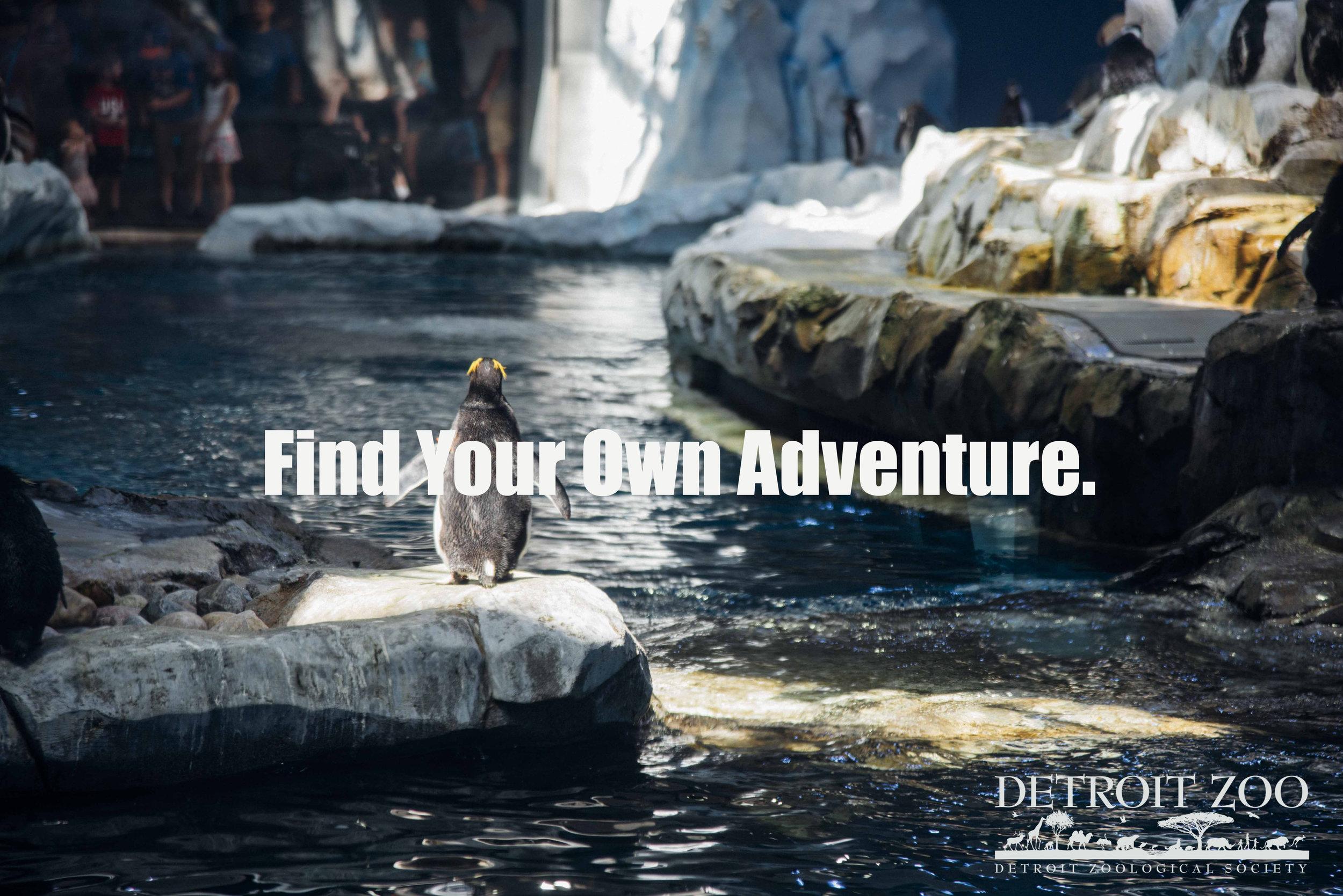 Zoo Adventure.jpg