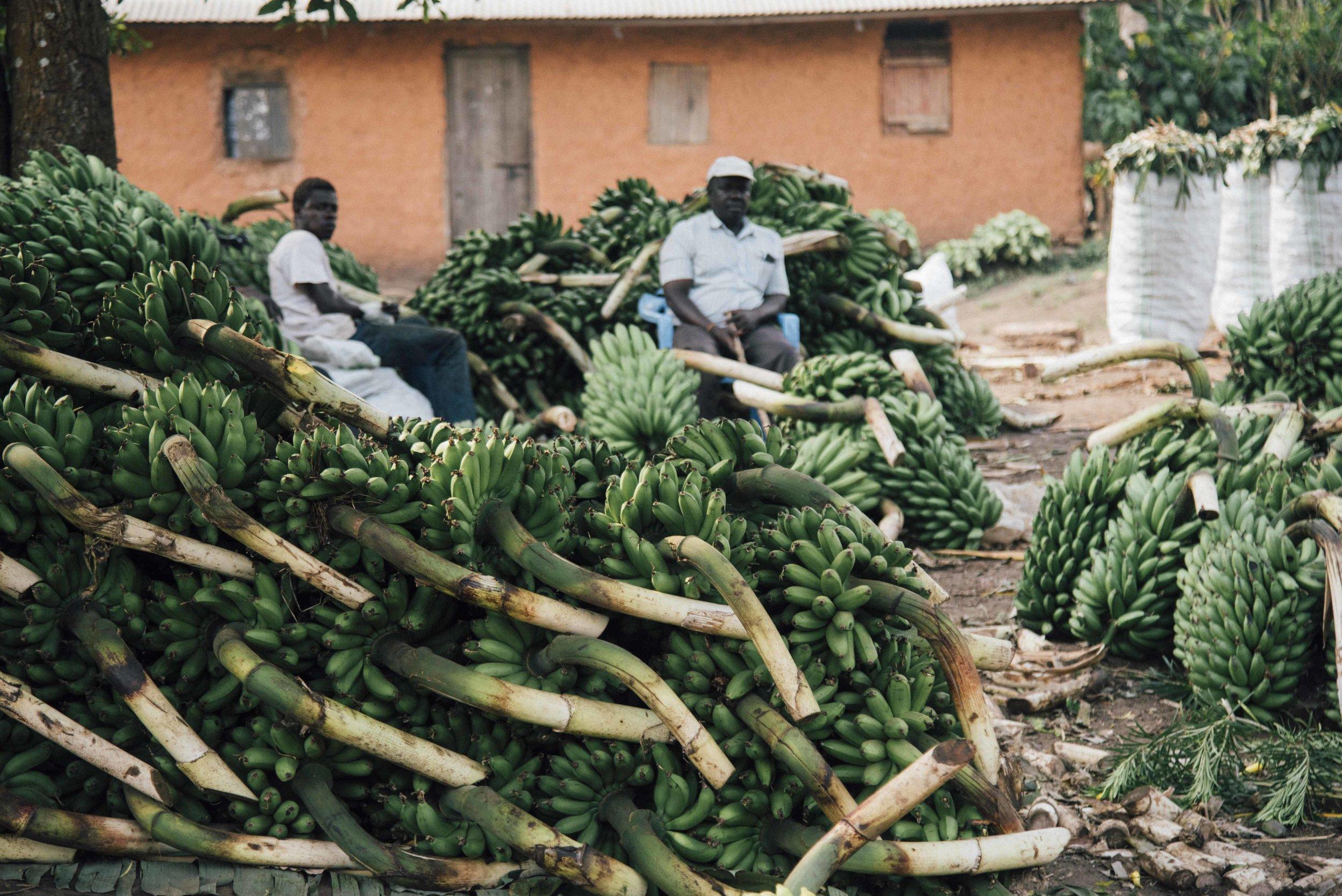 **Uganda 3 2019 019.jpg