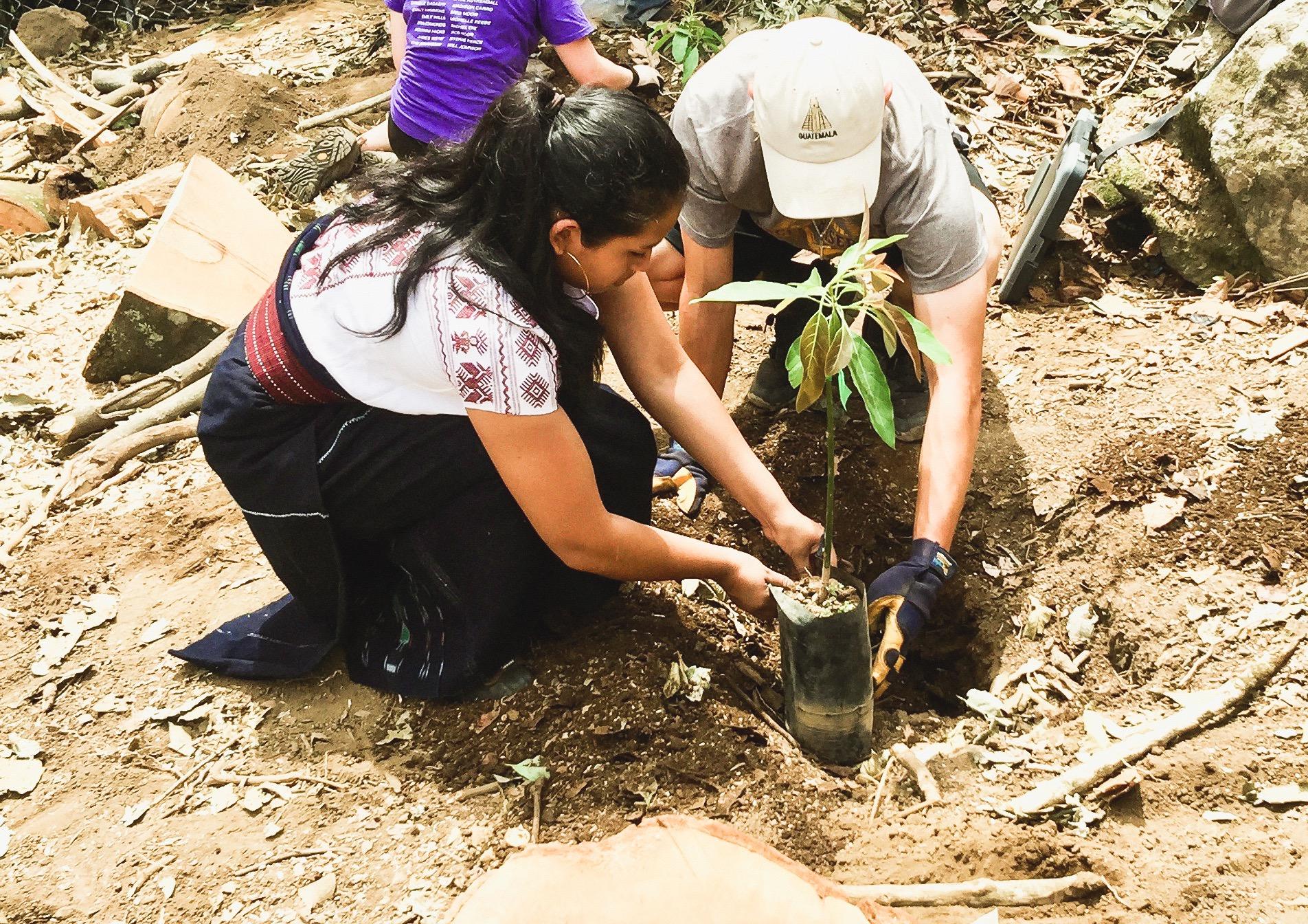 Planting_Avocados_togetherEDITED.jpg