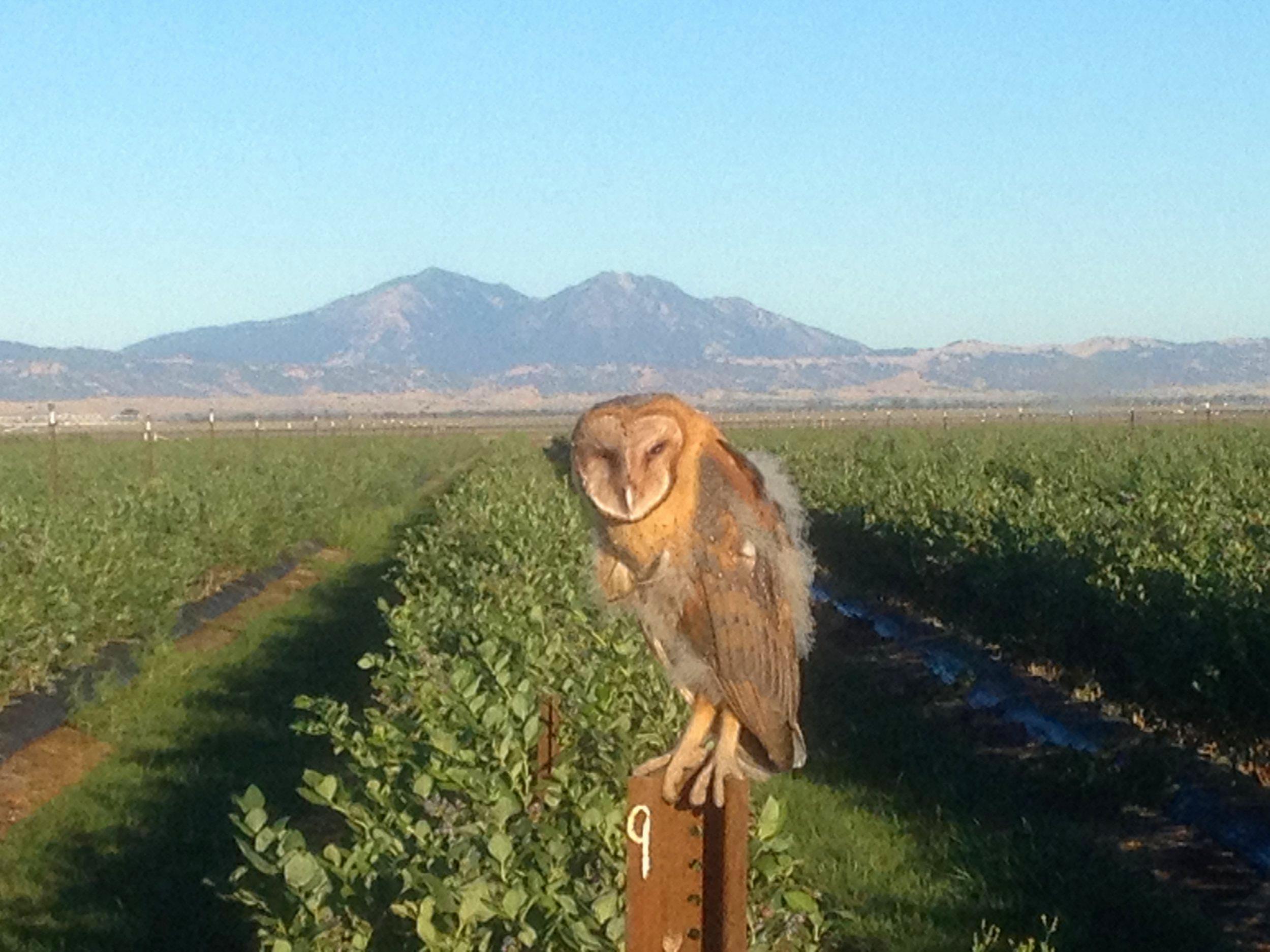Owl2012.jpg