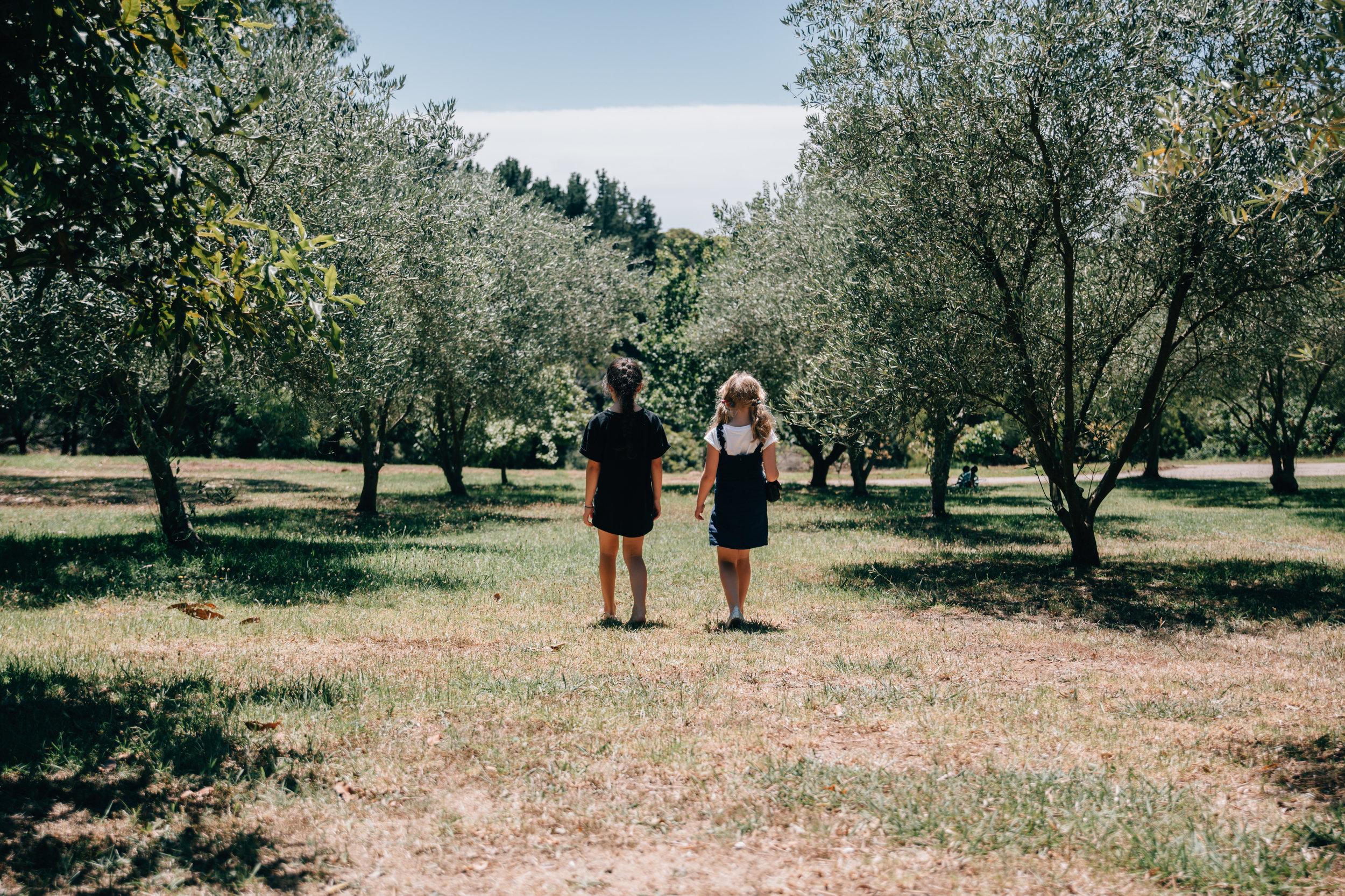 exploring the olive grove.jpg