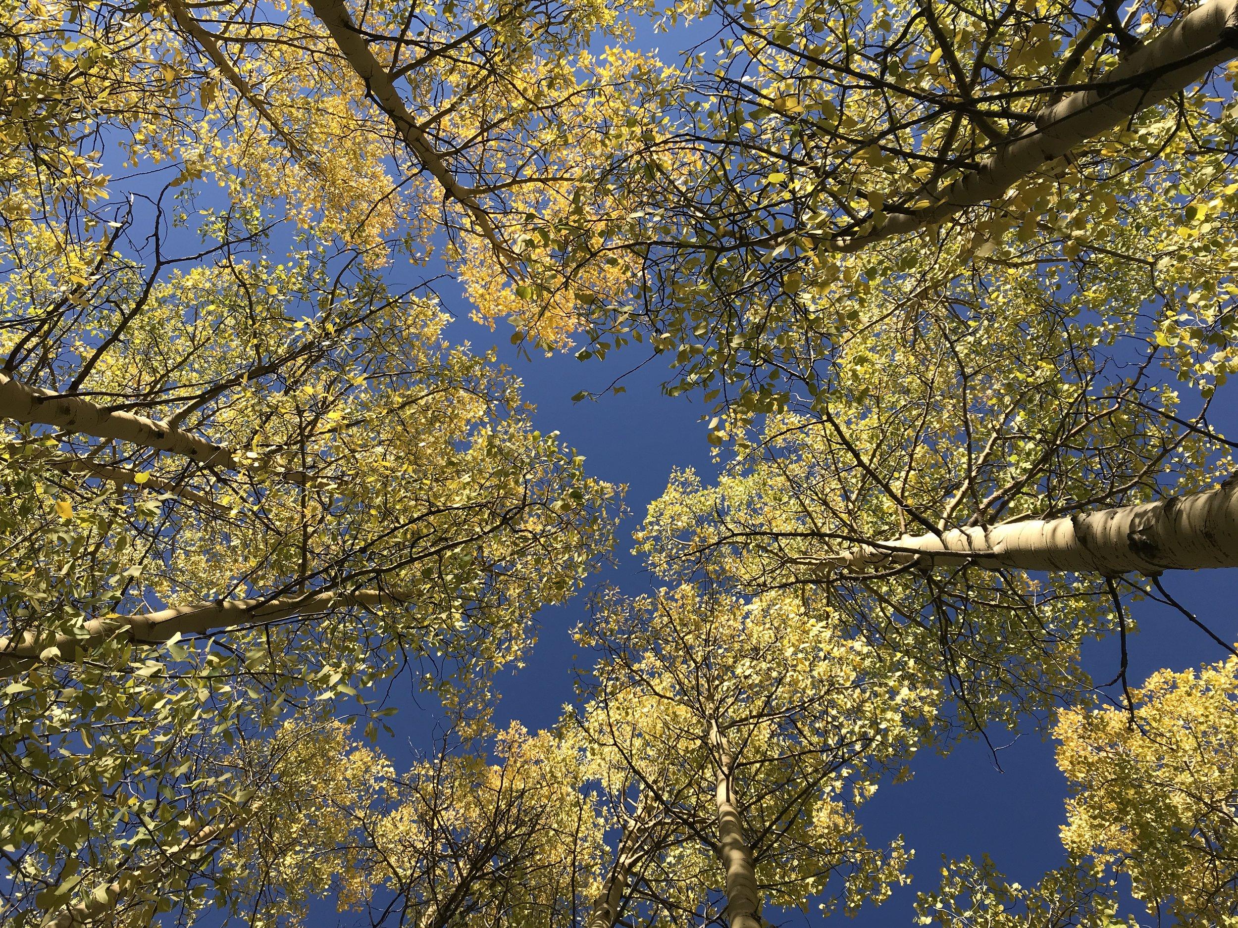 We plant 100 treesfor every van sold. -