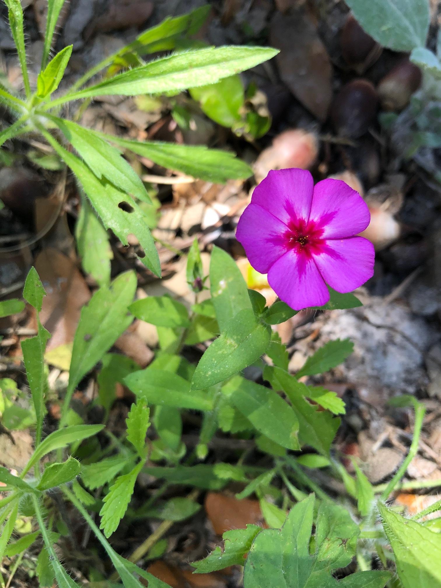 Pretty Flower @ Dog Park