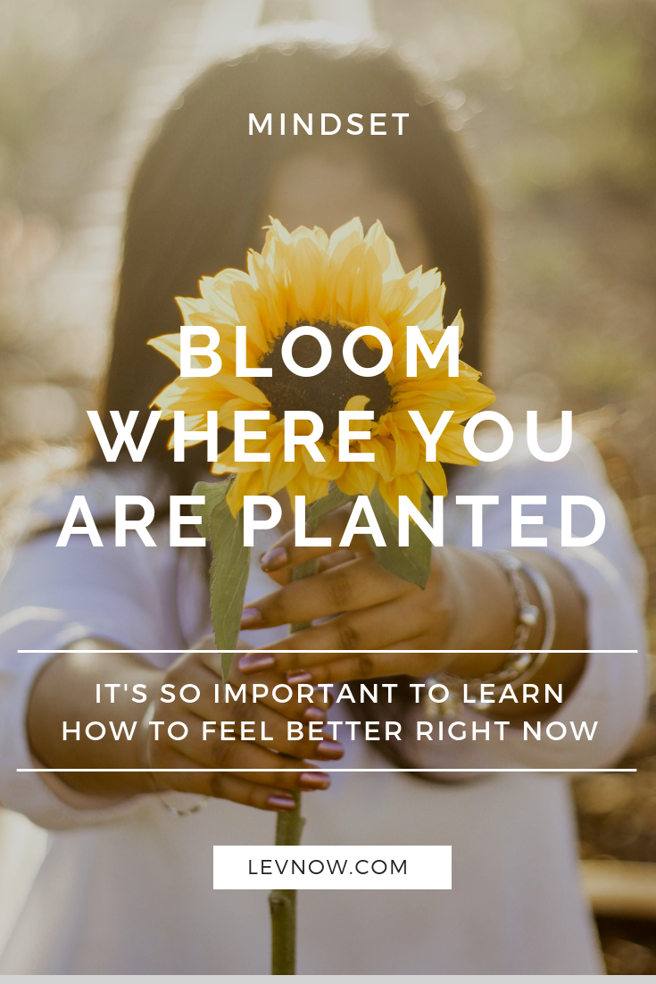 Bloom Where you are Planted - Levnow