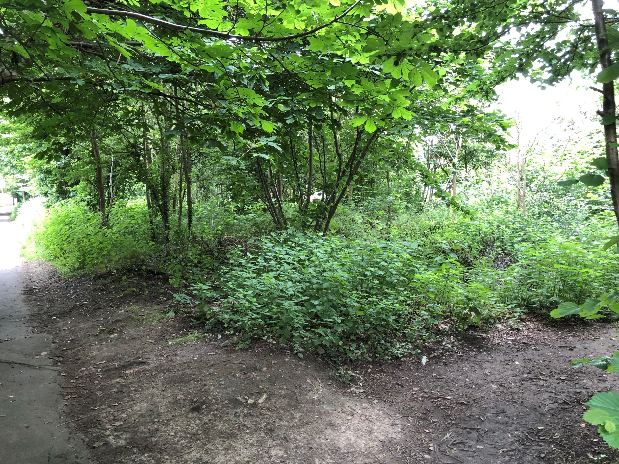 Wild play area before clearance