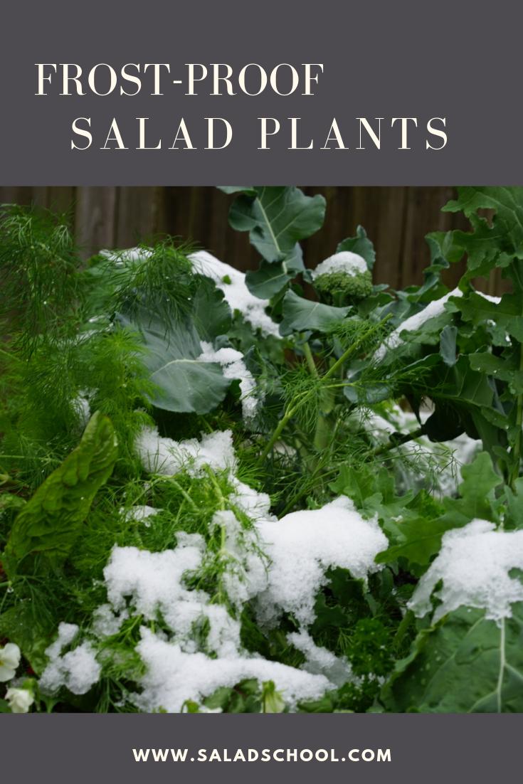 Frost Proof Salad Plants