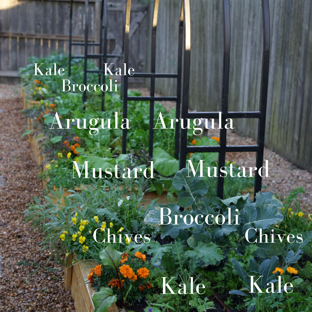 Here's a sample planting plan from my own Houston salad garden.