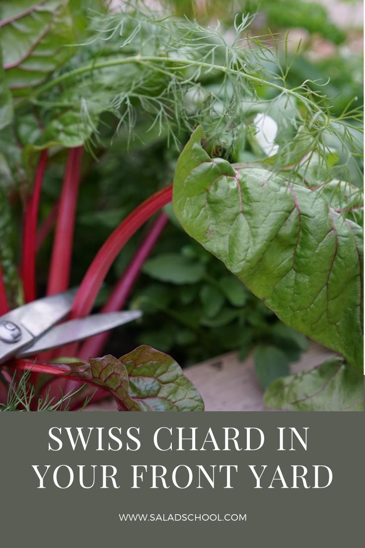 Swiss Chard.jpg