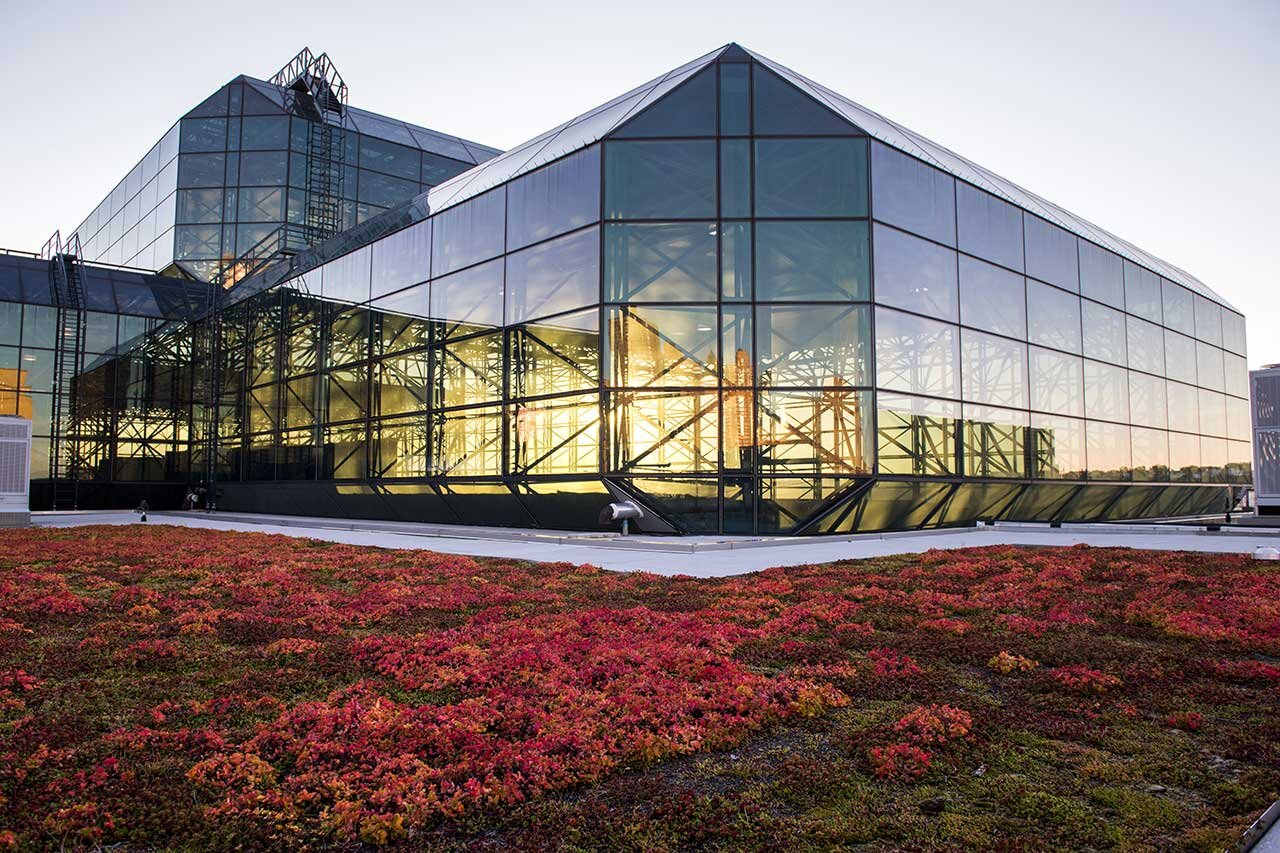 Jacob Javits Center, nyc - The 6.75 acre Jacob K. Javits Convention Center green roof has become a sanctuary for area wildlife while reducing energy costs.