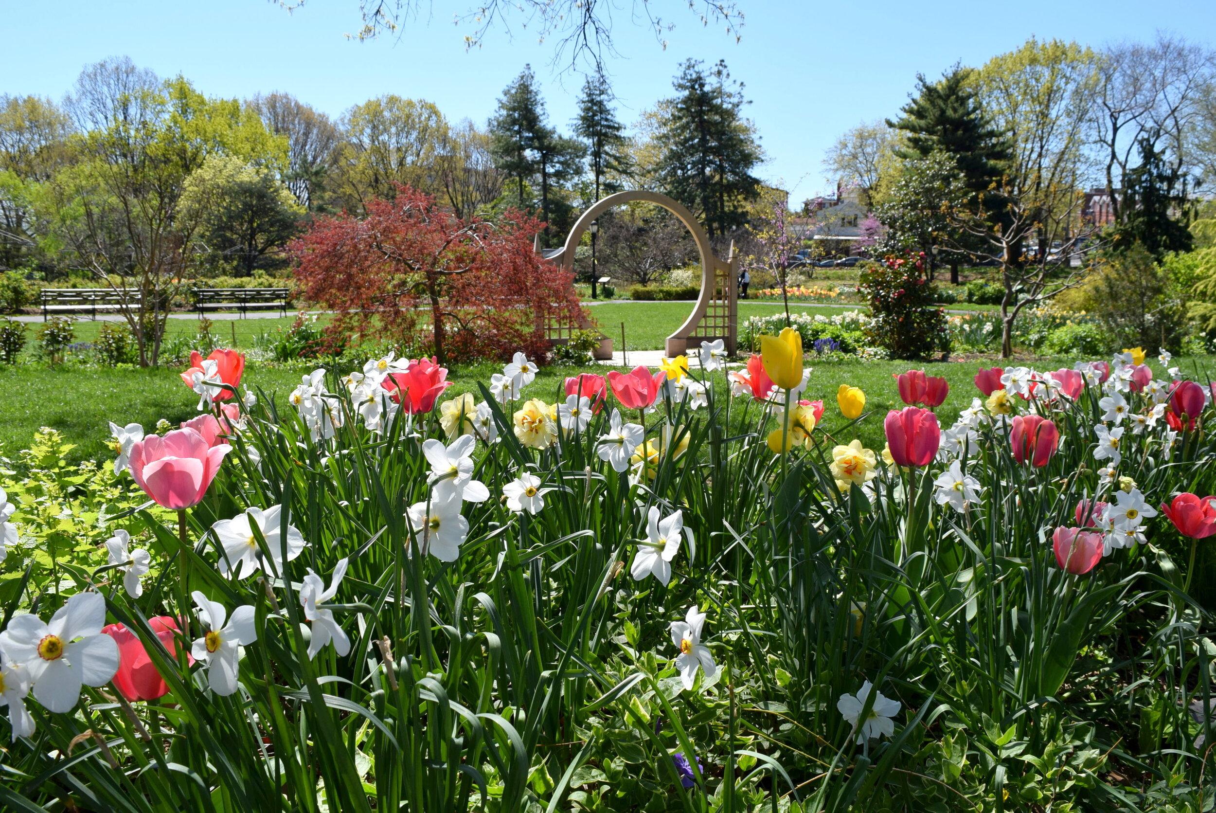First-Weekend-tulipdaff_CREDIT-Anne-Tan-Detchkov0.jpg