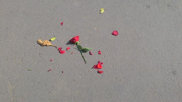 rose-640443_640.jpg