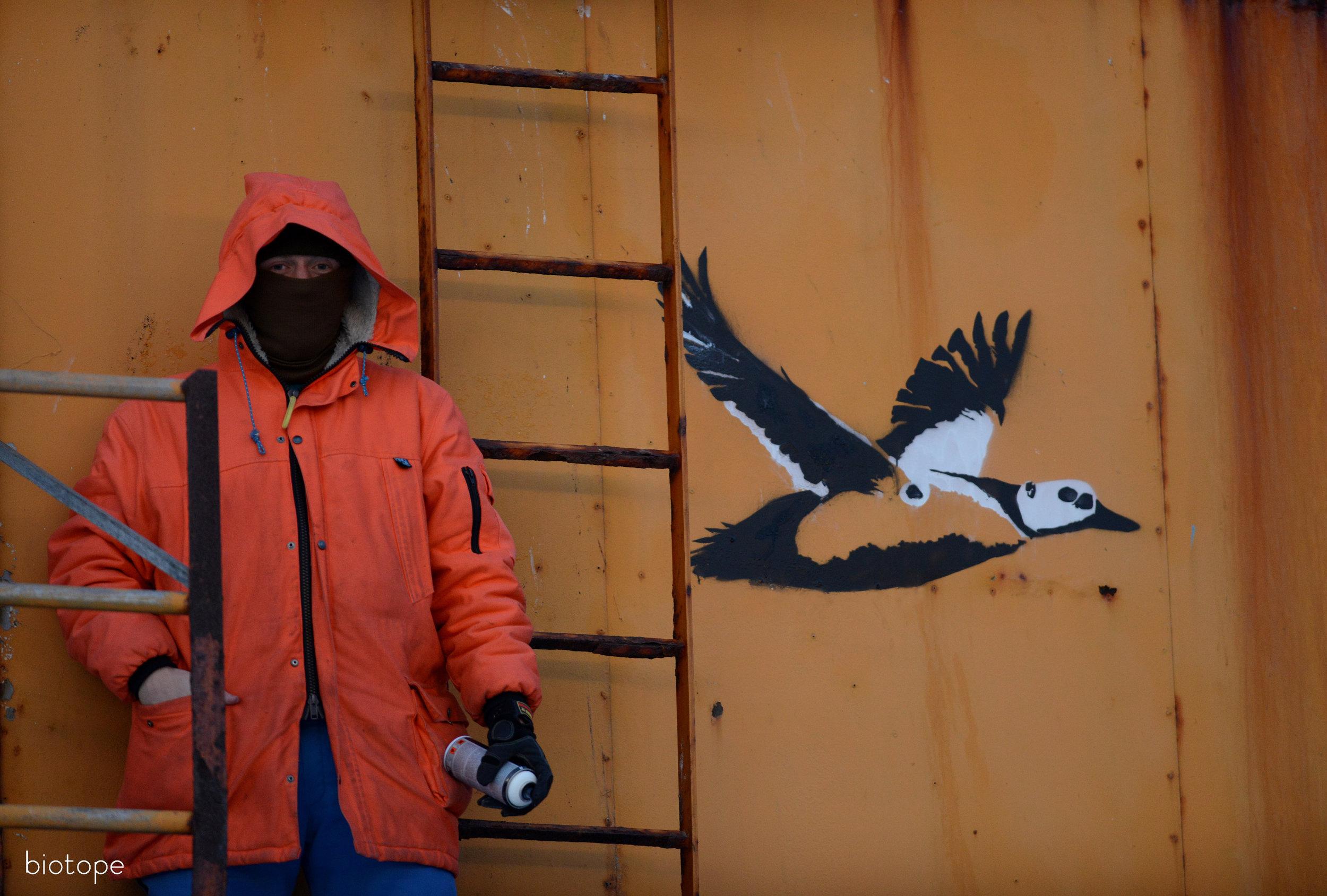 151 Stellers Eider Vardø street art on crane & Tormod A Foto Alonza Garbett Med Res copyright Biotope.jpg