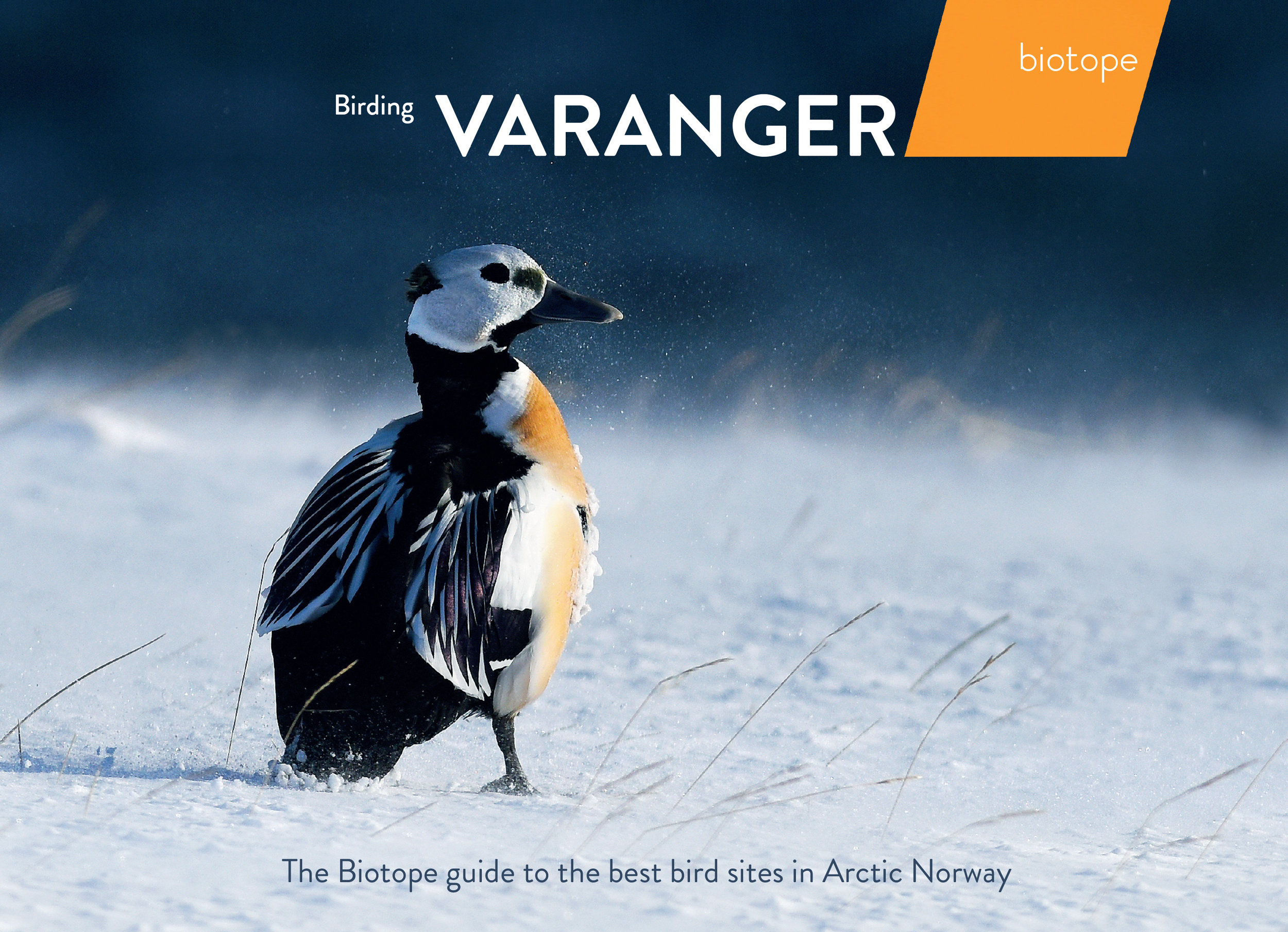 the cover of the best selling destination guide book  `Birding Varanger ´, by Biotope (4000+ copies sold pr May 2019)
