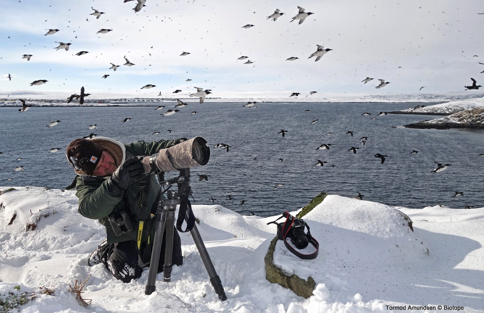 Richard_Crossley_at_Horn_ya_bird_cliff_Gullfest_2014_March_Amundsen_Biotope.jpg