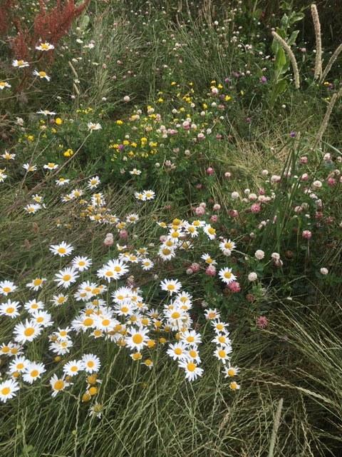 Wild flower meadow …