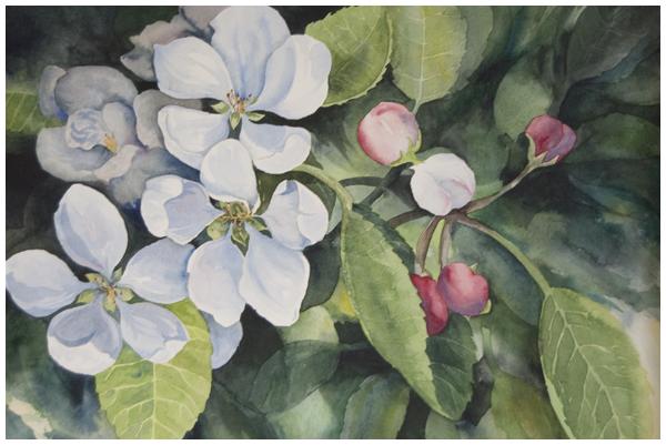 apple-blossoms.jpg