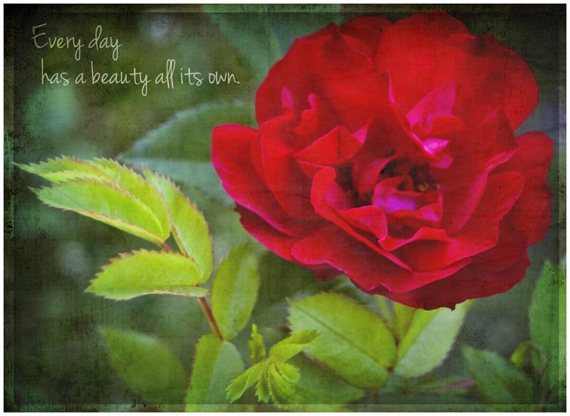 every-day-has-a-beauty-800w.jpg