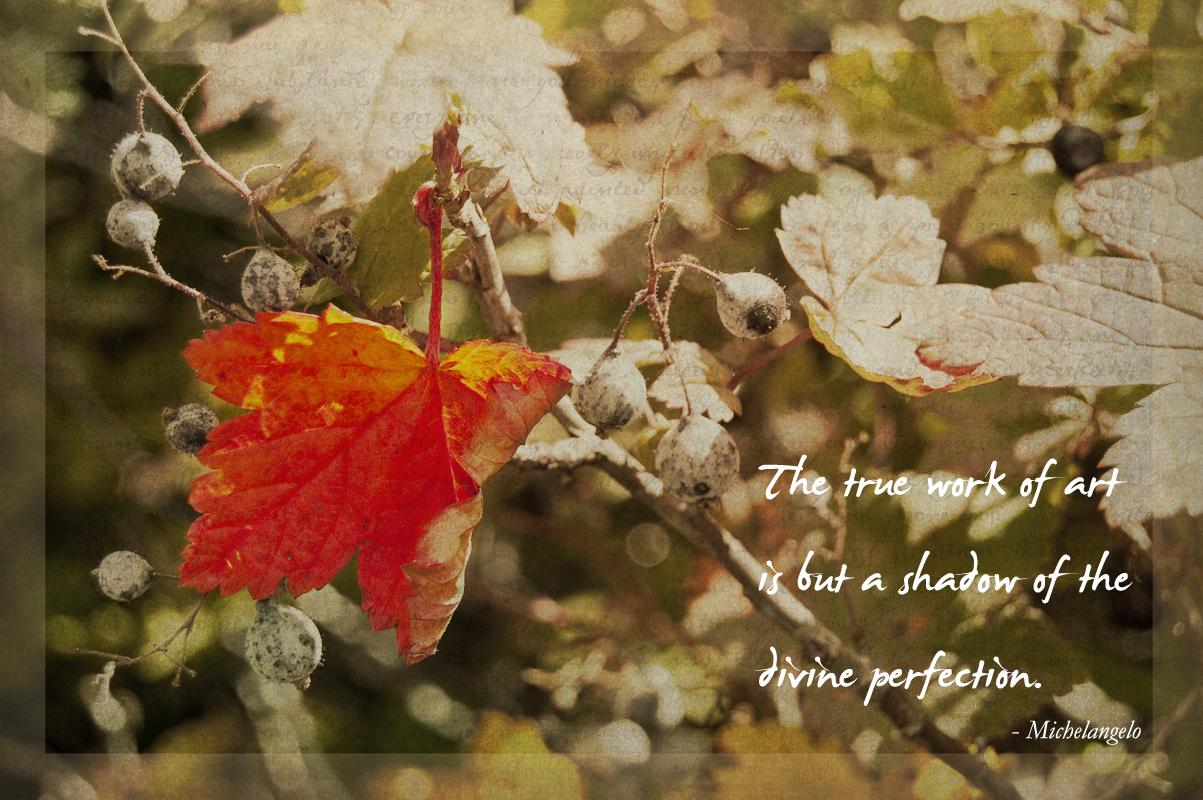 leaf-quote-72dpi.jpg