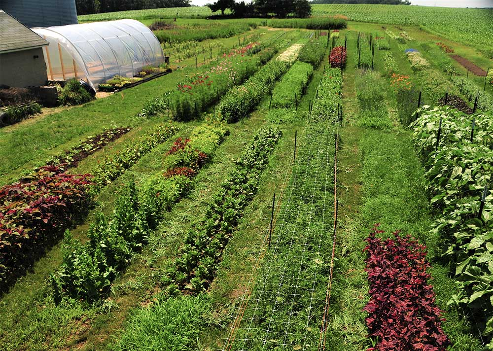 Seasonal & Sustainable: - We are a small fruit and flower farm in Waterloo, WI, actively working to improve the soil and biodiversity. We plant native flowers, prairie plants and add nesting boxes and bat houses. If needed, we apply only OMRI certified (organic) products for pest control.