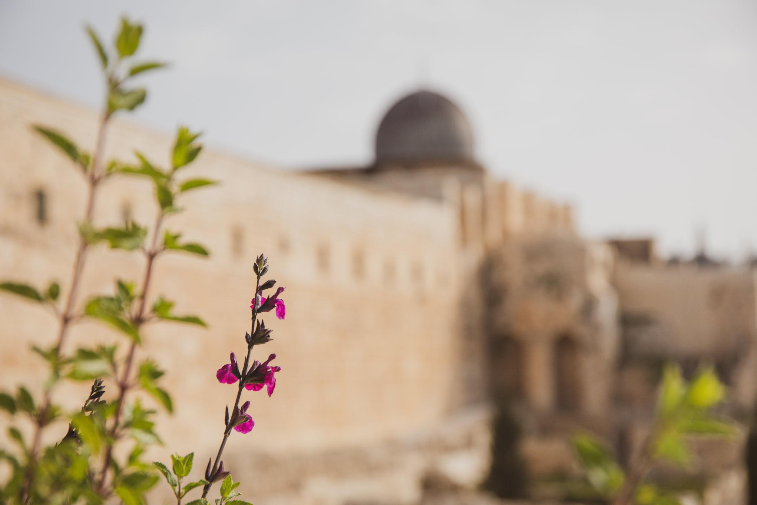Israel_019.jpg