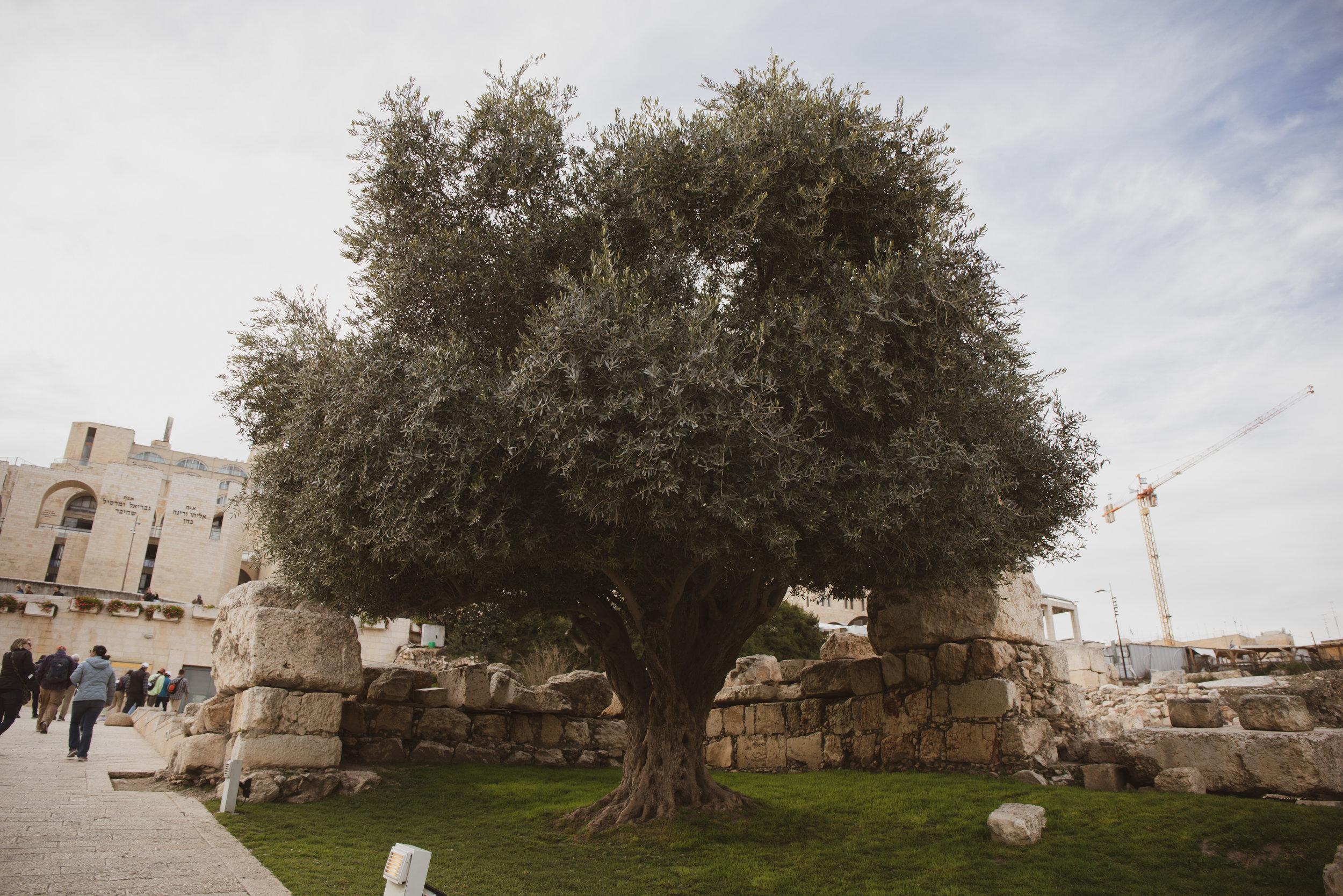 Israel_151.jpg