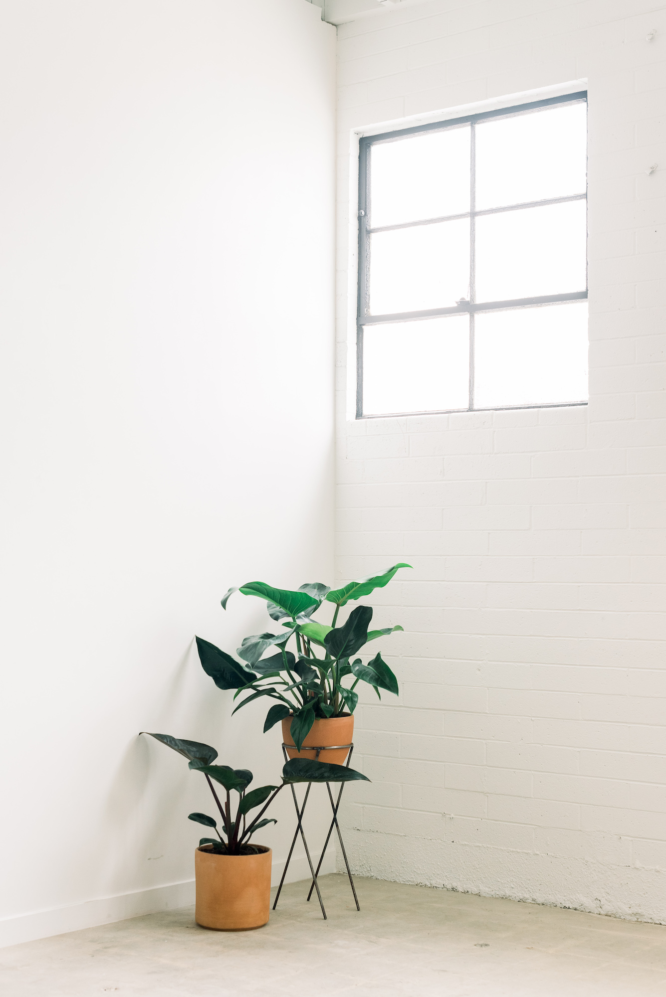 Bright Natural Light - windows everywhere let in that southern California sunshine