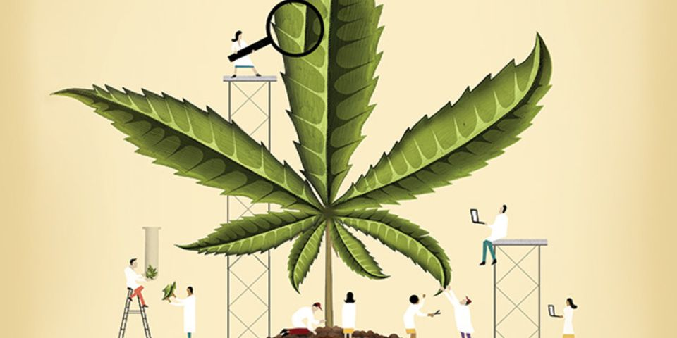 large_mar2016_feature_cannabisresearch_644.jpg
