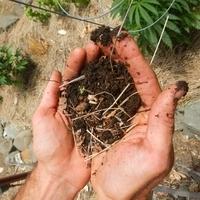 Building Living Soil