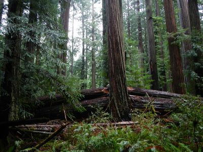 forest_Mad_Squaw_400x300.jpg