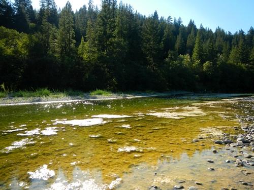 algae mats_sf_500x375.jpg