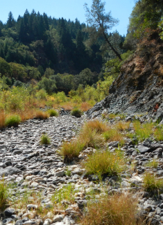 Lower Outlet Creek – 9/6/12