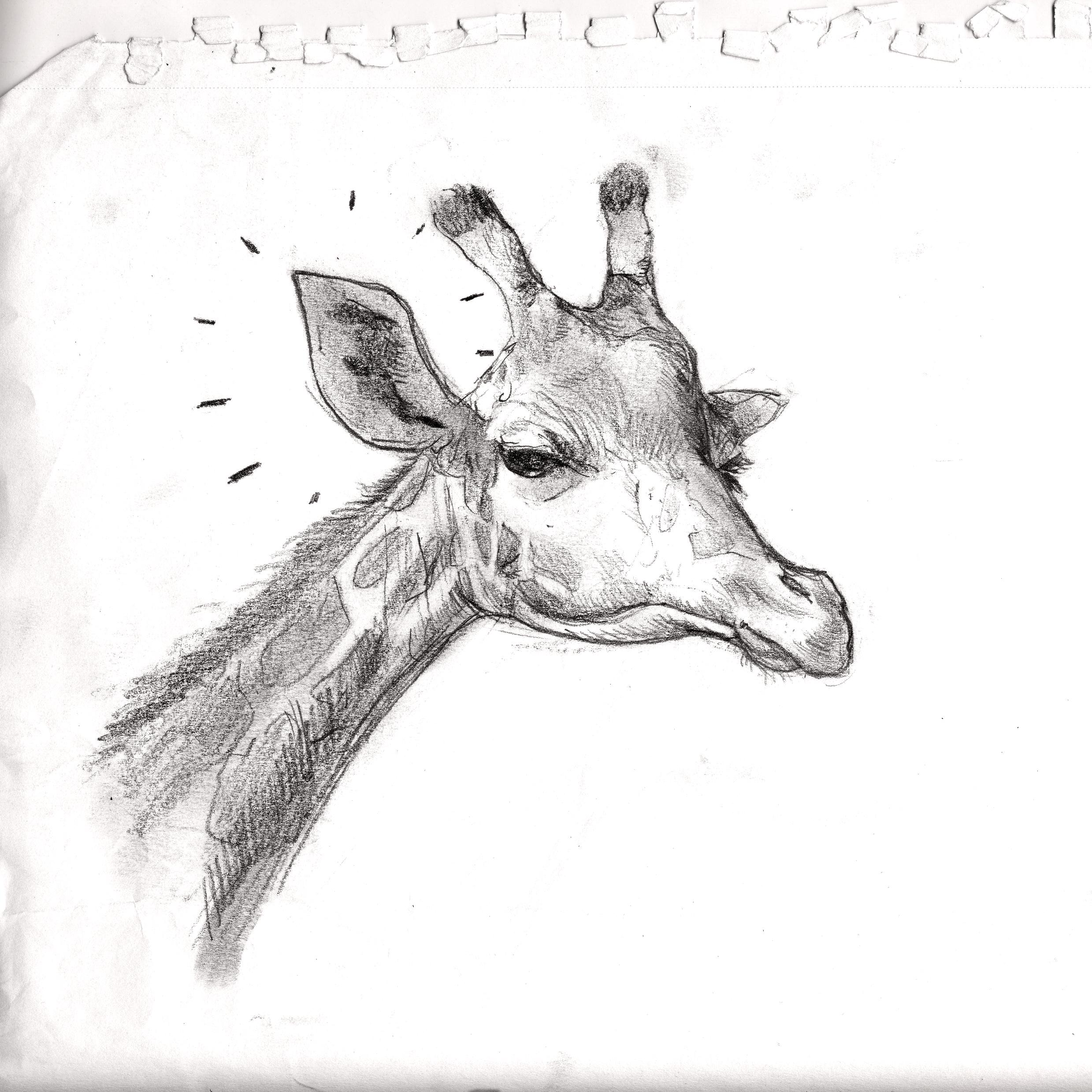 Giraffe Ear.jpg