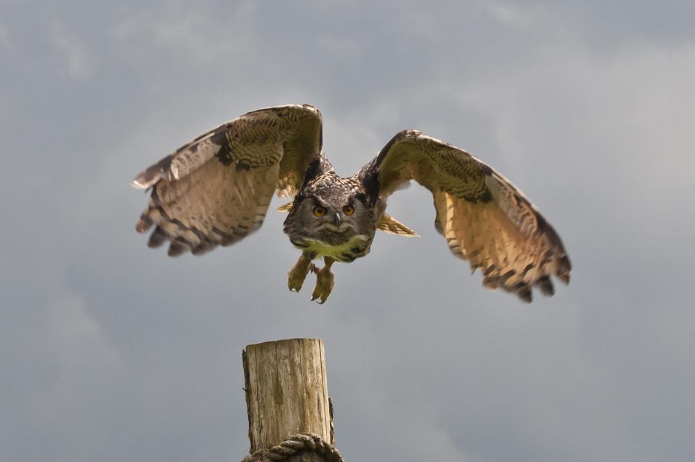 owl (1 of 2).jpg