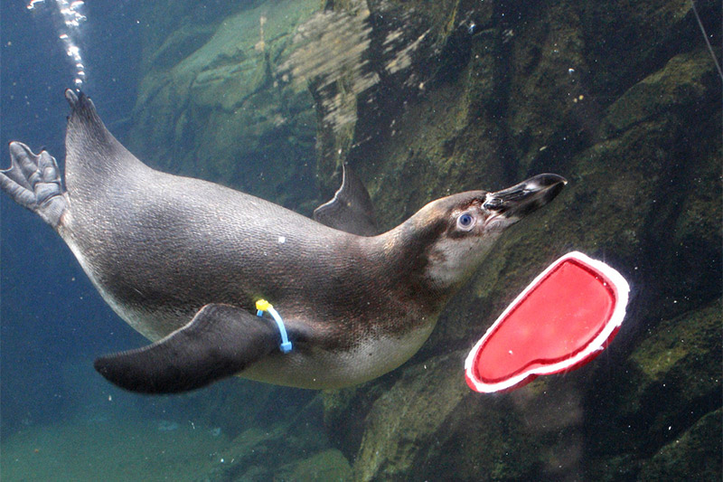 Valentine's Day Enrichment - About: Celebrate Valentine's Day the wild way with festive treats for the animalsDate/Time: February 9th, 10 am – 3:00 pmLocation: Woodland Park Zoo5500 Phinney Ave. N, Seattle, WA 98103Cost: Free w/ Admission or Membership
