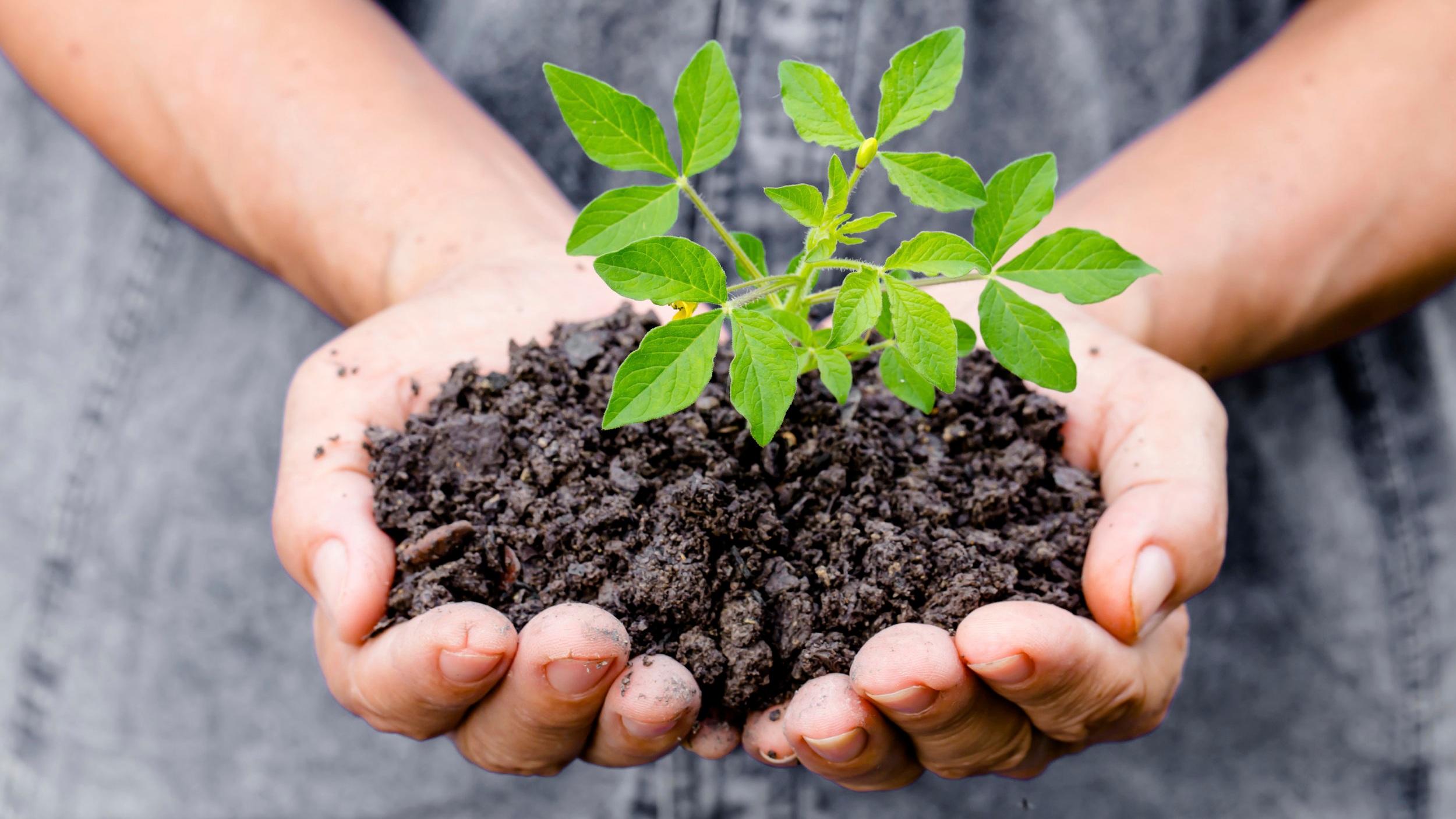 A New Church Plant -
