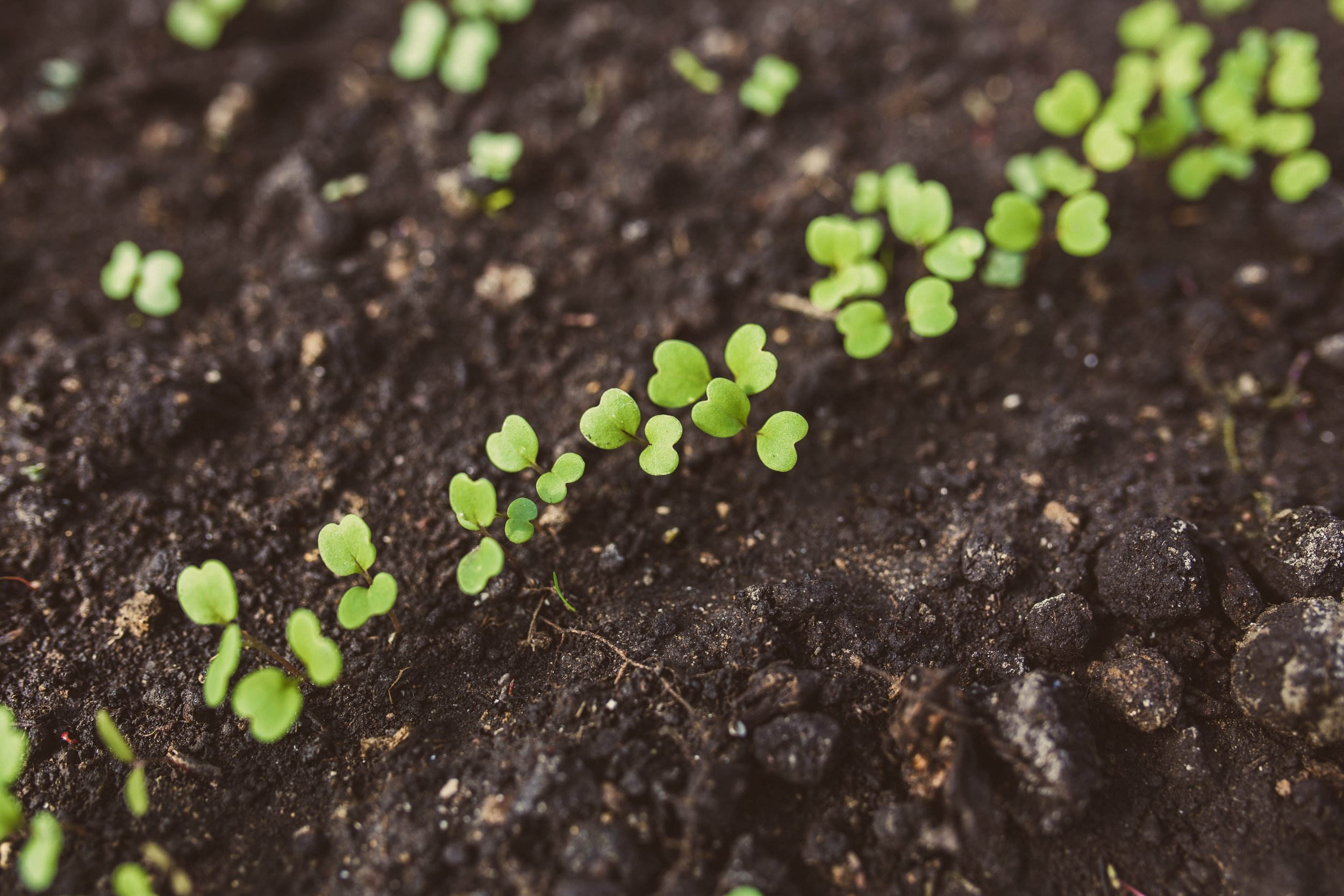agriculture-close-up-cultivation-6427.jpg