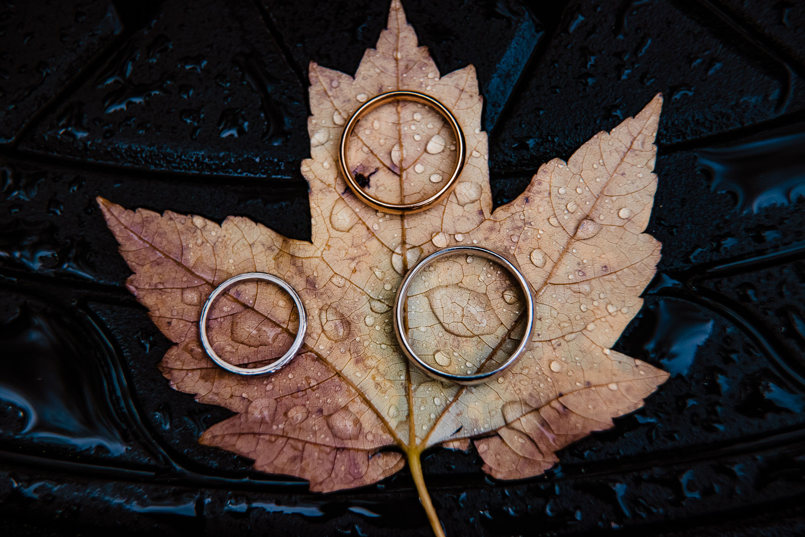 Wedding rigns on a leaf